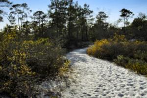 Sandy Trail through Reserve