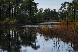 Pond in Bon Secour NWR