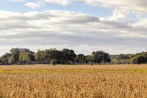 Mobile County Farm