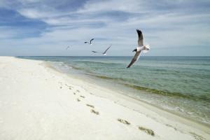 Bon Secour NWR Beach