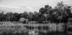 Fowl River