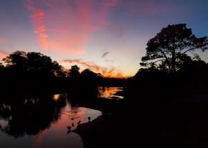 Langan Park Geese