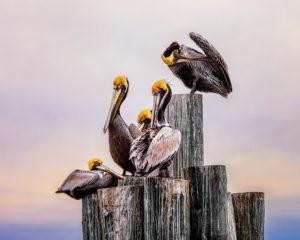 Welcoming Committee