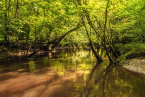 Red Creek  Mississippi WMA