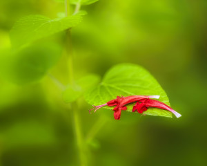 Spent Petals