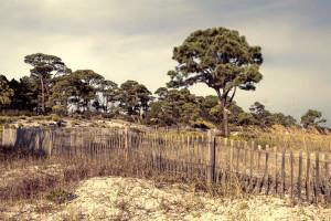 Bird Sanctuary Dunes