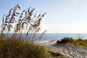 Bird Sanctuary Beach