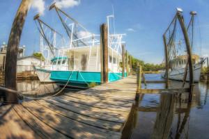 Fisheye Wharf