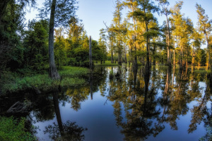 Boneyard Lake Area Mississippi WMA