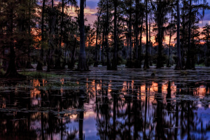 Indian Creek Mississippi WMA
