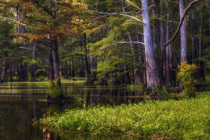 Lake Luther Mississippi WMA
